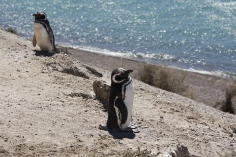 Puerto Madryn and around